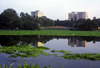 India - Calcutta / Kolkata (West Bengal): skyline and water - photo by Anamit Sen