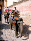 India - Jaipur: elephants used to ferry tourists up the steep slope to the Amber Fort - photo by R.Eime