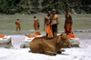 India - Uttaranchal - Rishikesh: Hindu pilgrims and sacred cow by the Ganges river - photo by W.Allgöwer