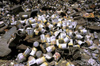 India - Ladakh - Jammu and Kashmir: rubbish - pile of empty cans - photo by W.Allg�wer