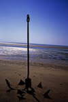 India - Diu: an anchor on a beach of Diu island - photo by E.Petitalot