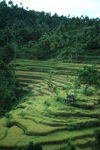 Indonesia - Bali: terraced rice fields - photo by M.Sturges