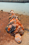 Iran - Hormuz island: old cannon rusting on the beach - Portuguese castle - photo by M.Torres