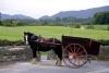 Ireland - Killarney (county Kerry): horse and cart (photo by R.Wallace)