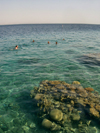 Israel - Eilat: transparency - Red Sea - photo by Efi Keren