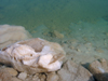 Israel - Dead sea: salt boulders - photo by Efi Keren
