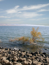 Israel - Sea of Galilee / Lake Tiberias: lake shore - Jordan Great Rift Valley - photo by E.Keren