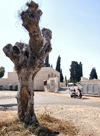 Israel - Hadera, Haifa district: cemetery - photo by Efi Keren