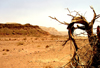 Israel - Eilat - Timna Valley Park: the power of the desert- photo by Efi Keren