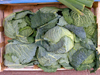 Israel - Kfar Vitkin: cabbages - Brassica oleracea / couves - vegetables - photo by E.Keren