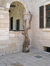 Haifa, Israel: life after death - old tree - photo by E.Keren