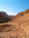 Ein Gedi oasis and National Park, South district, Israel: people strolling in the park - photo by E.Keren