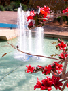 Tel Aviv, Israel: tree with red flowers and fountain at Rabin square - photo by E.Keren