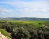 Deir Rafat monastery, Mateh Yehuda region, Jerusalem district, Israel: olive orchards and green fields - photo by M.Torres