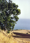 Israel - Sea of Galille / Lake Tiberias / Yam Kinneret / Kineret lake: site of the Sermon on the Mount - photo by G.Frysinger