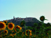 Italy / Italia - Todi (Umbria): the town and the sunflowers (photo by Emanuele Luca)