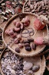 C�te d'Ivoire - Cracking nuts at the market (photo by J.Filshie)