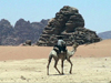 Jordan - Wadi Rum: a bedouin on his camel - photo by A.Slobodianik