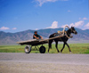 Kazakhstan - Almaty oblys: on a road in the countryside, a horse pulling a cart - photo by E.Petitalot