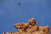 Kazakhstan, Charyn Canyon: Valley of the Castles - a vulture above the gorge - photo by M.Torres