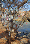 Kazakhstan, Charyn Canyon: prayer tree by the Charyn River - photo by M.Torres