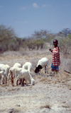 Kenya - Olorgesailie - Rift Valley province: young shepherd - photo by F.Rigaud