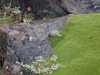Kerguelen island: Cap Kidder - patch of moss bordered by lichens (photo by Francis Lynch)