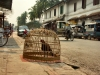 Laos - Luang Prabang: caged bird (photo by P.Artus)