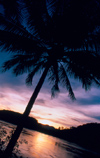 Laos - Luang Prabang - Sunset with palm 1