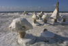 Latvia - Ventspils: ice mushrooms (photo by A.Dnieprowsky)