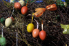 Latvia - Ventspils: Easter decorations - eggs on a tree - Easter tree (photo by A.Dnieprowsky)
