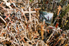 Siauliai, Lithuania: Hill of Crosses - painting and a million crosses - photo by J.Pemberton