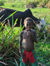 Bekopaka, Antsalova district, Melaky region, Mahajanga province, Madagascar: a boy and his zebu - photo by M.Torres