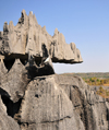 Tsingy de Bemaraha National Park, Mahajanga province, Madagascar: jagged pinnacles - karst limestone formation - UNESCO World Heritage Site - photo by M.Torres