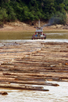 Rajang River, Sarawak, Borneo, Malaysia: a raft of floating timber makes its way downstream - these rafts are so large they often take up the entire width of the river - photo by R.Eime