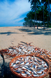 Tropical beach - fish drying, Kelantan, Kota Baru, Malaysia. photo by B.Lendrum