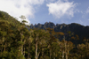 Mount Kinabalu, Sabah, Borneo, Malaysia: forest and Mount Kinabalu, seen from Mesilau nature resort - photo by A.Ferrari