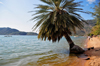 Cape Maclear / Chembe, Malawi: Lake Malawi / Lake Nyasa - palm-tree leaning over the water - beach view with Domwe Island on the left - photo by M.Torres
