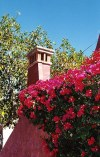 Mexico - Sonora state: bougainvillea blooms (photo by G.Frysinger)