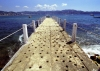 Mexico - Acapulco de Juarez / ACA (Guerrero state): old pier (photo by Andrew Walkinshaw)