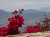Mexico - Monte Alb�n: red (photo by A.Caudron)