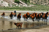 Töv province, Mongolia: horses are kindly asked to leave the pool - Zorgol Khairkhan - photo by A.Ferrari