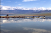 Mongolia - Ureg lake: horses in the water - photo by A.Summers