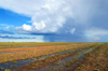 Gobi desert, southern Mongolia: clouds and rain in the horizon - photo by A.Ferrari