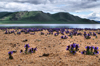 Khorgo-Terkhiin Tsagaan Nuur NP, Mongolia: flowers growing in the sand along the White Lake - photo by A.Ferrari