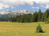 Montenegro - Crna Gora - Durmitor national park: forest - photo by J.Kaman