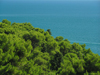 Montenegro - Crna Gora - Ulcinj riviera: Mediterranean colours - vegetation by the Adriatic - photo by J.Kaman