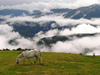 Montenegro - Crna Gora - Komovi mountains: horse from Katun Štavna and fog in the valley - photo by J.Kaman