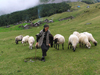 Montenegro - Crna Gora - Durmitor national park: mountain shepherd and her sheep - photo by J.Kaman