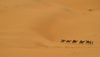 Morocco / Maroc - Black desert - near Merzouga: caravan in the Sahara desert - photo by J.Banks